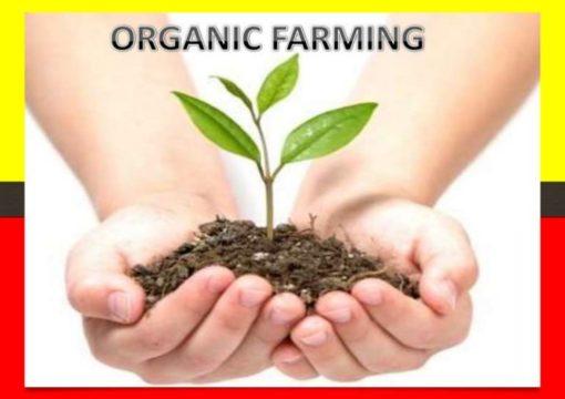 Истражување за органско производство