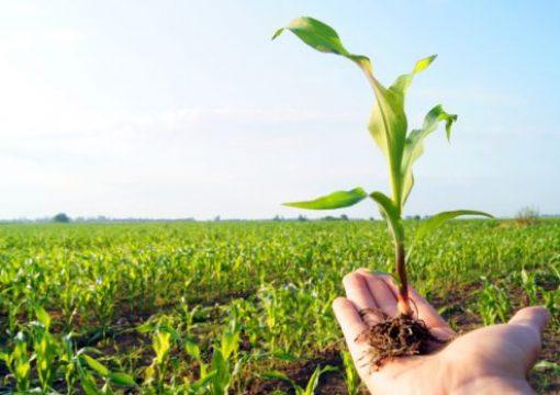 Унапредување на земјоделското производство